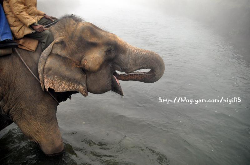 [尼泊爾]騎大象看犀牛。奇旺國家動物園