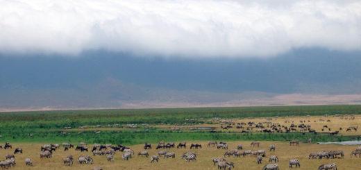 [坦尚尼亞]恩格龍格隆火山獵遊。在非洲,只有食物才會跑。 @飯糰五號的旅遊狂想+