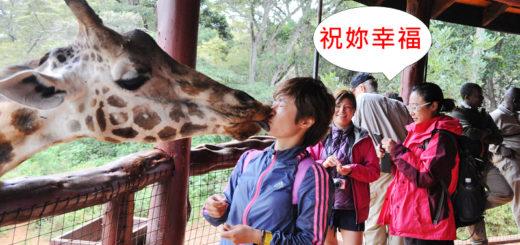 [奈洛比]我吻了長頸鹿,the Giraffe center @飯糰五號的旅遊狂想+