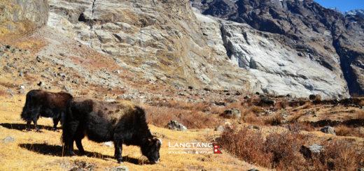 [尼泊爾]藍塘紀行,Day 4Mundu-Sherpagaon行在黑色雪崩之上。 @飯糰五號的旅遊狂想+
