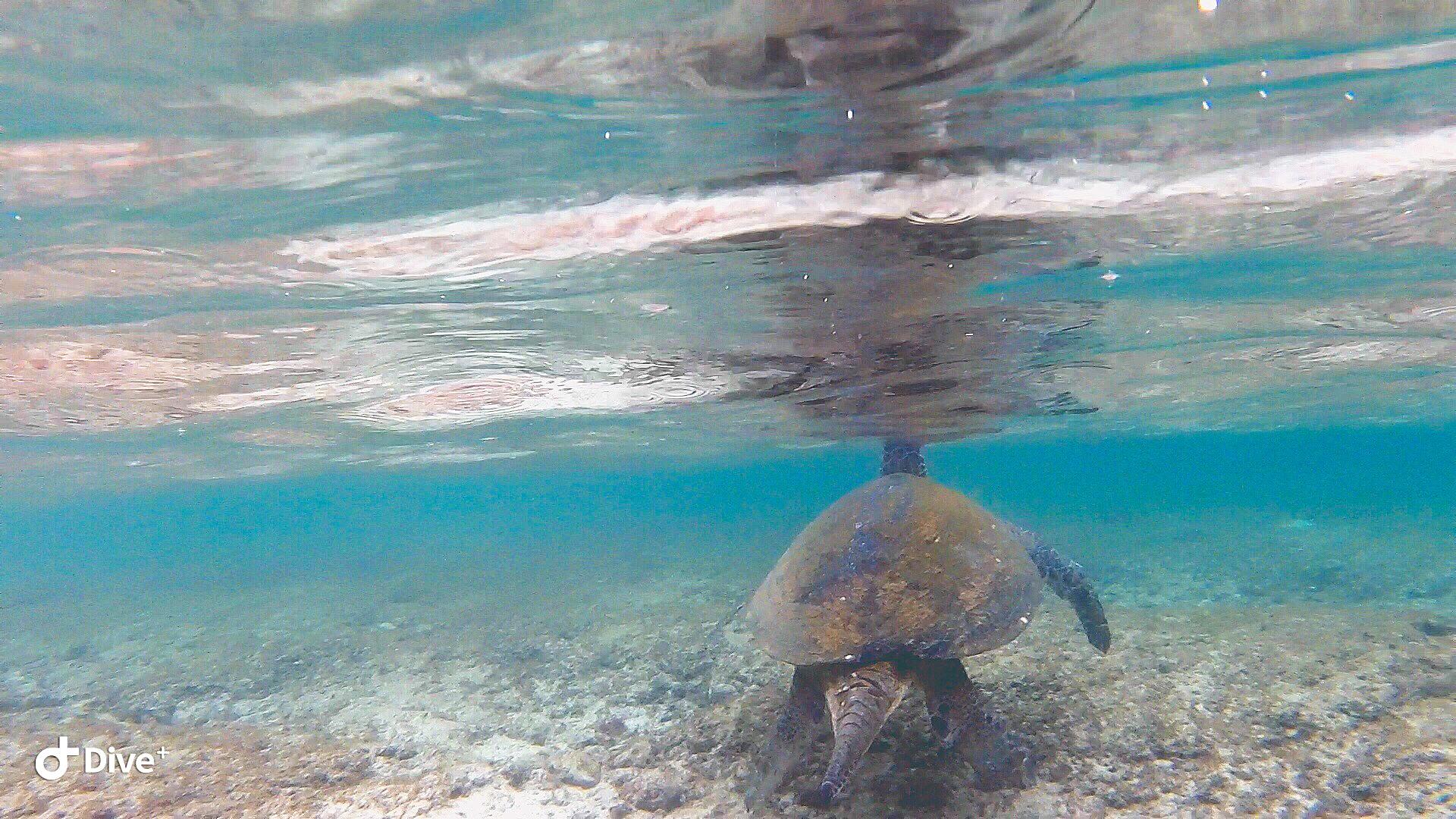 潛往小琉球海底機場看飛機 x 海龜航空限定版 x 奧之海潛水