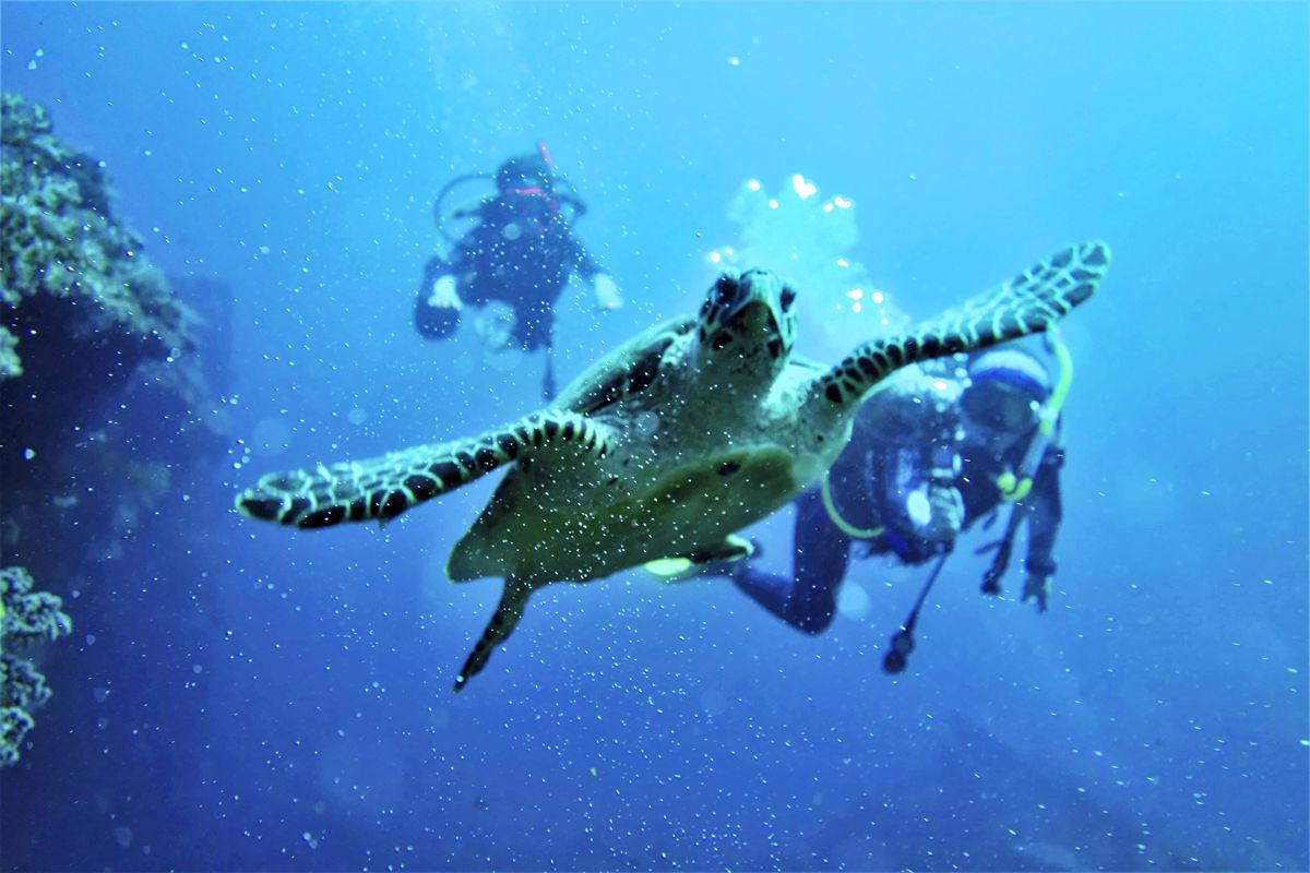 前進初學者的殿堂,世界級潛點-土蘭奔x阿美灣,相遇出門吃Brunch的隆頭鸚哥。