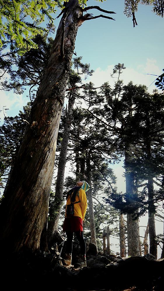 [3858]我在玉山北峰吹著風