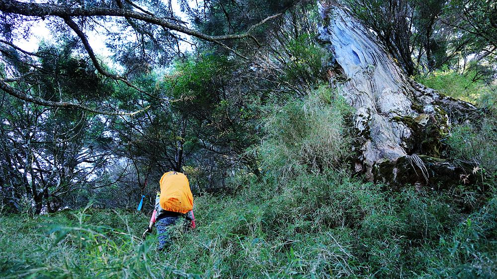 [3115]中之關上庫哈諾辛山下天池的小O路線