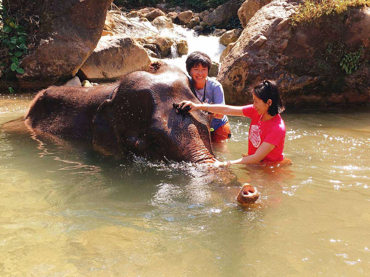 紅著眼眶說再見,緬甸大象養老營Green Hill Valley Elephant Camp