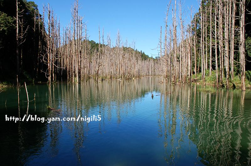 水漾森林。掌聲鼓勵。 @飯糰五號的旅遊狂想+