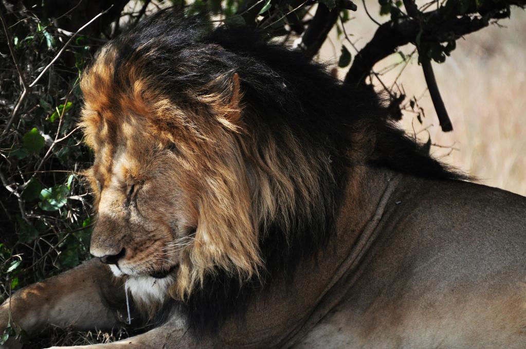 [肯亞]與馬賽馬拉的對話,非洲5霸任務完成 @飯糰五號的旅遊狂想+