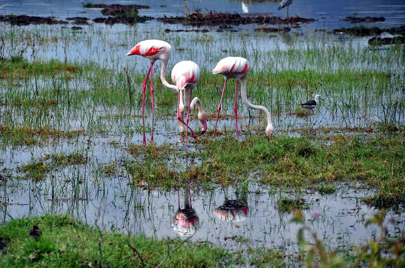 [肯亞]沒有火鶴的Lake Naruku,只能含淚跳佛朗明哥 @飯糰五號的旅遊狂想+
